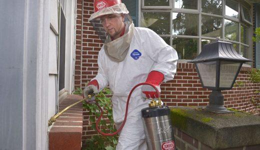 Essex pest control solutions